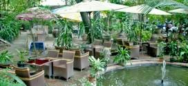 Những địa điểm quán cafe sân vườn giá rẻ tại tphcm