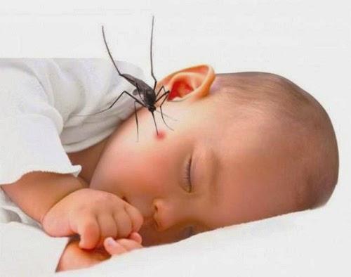 Nên làm gì khi bị sốt xuất huyết? Các phòng tránh ra sao?