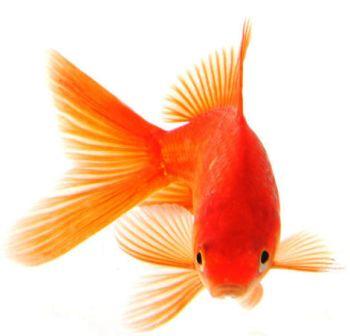 Nằm mơ thấy cá – Giải mã ý nghĩa giấc mơ thấy con cá